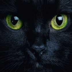Profilbild von Speedster