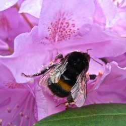 Profilbild von kelebek