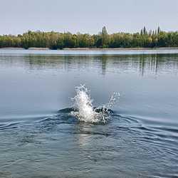 Profilbild von WasserratteM