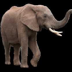 Profilbild von elefant128