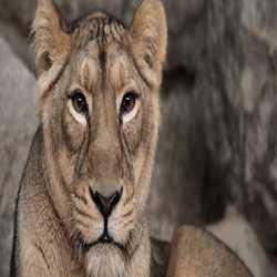 Profilbild von löwe60