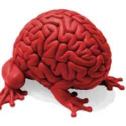 Profilbild von Siebgehirn