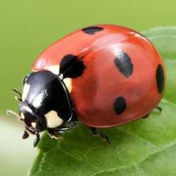 Profilbild von Blattlöwe