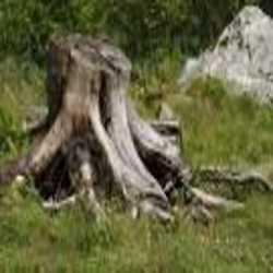 Profilbild von Baumwurzel
