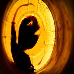 Profilbild von sgodi