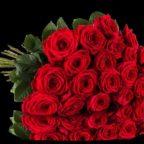 01-0000-rosenbymiflora-rednaomi-liegend-pb2_9_4-2