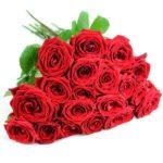 20_rote_rosen-2
