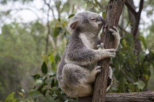 australia-871002_1280