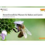 bienenfreundlichPflanzen