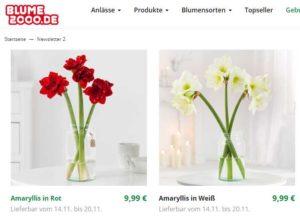 blume2000-de-amaryllis-rot-oder-weiss-fuer-999e