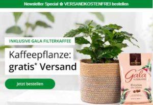 blume2000-de-kaffeepflanze-fuer-1499e-vkfrei