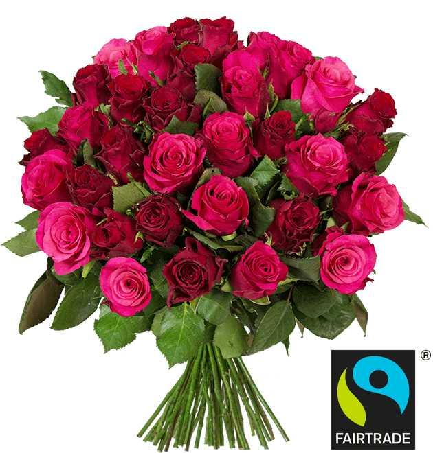 blumen-ideal-45-romantic-rosen-fuer-2498e