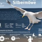 cover_die_silbermoewe