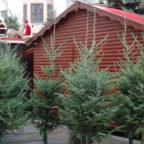 csm_Weihnachtsbaum-verschenken_ff5349ec5b