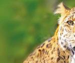 GRATIS Zoologischen Stadtgarten Karlsruhe besuchen vom 13.-19.09.21 für KVV-Abo-Kunden -regional-