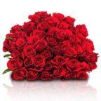 rosen-rot-liegend_1_