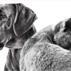 zooplus-20-rabatt-auf-royal-canin-nassfutter
